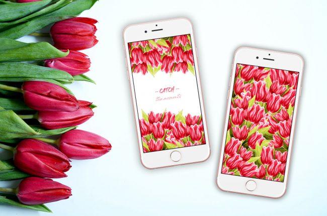 wiosenne-tapety-na-telefon-z-tulipanami-2-wersje-kolorystyczne
